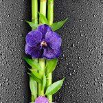 Капля Орхидея 351 ПВХ