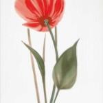 Декор Капри мак 2 красный 25*35 см