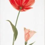 Декор Капри мак 1 красный 25*35 см