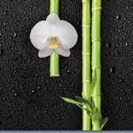 Кухонный фартук Орхидеи и бамбук (ПВХ пластик — фотопечать)