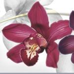Кухонный фартук Орхидеи (ПВХ пластик — фотопечать)