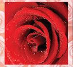 Кухонный фартук Розы (ПВХ пластик — фотопечать)