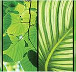 Кухонный фартук Зелёный мир (ПВХ пластик — фотопечать)