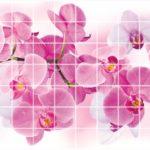 Орхидея Розея